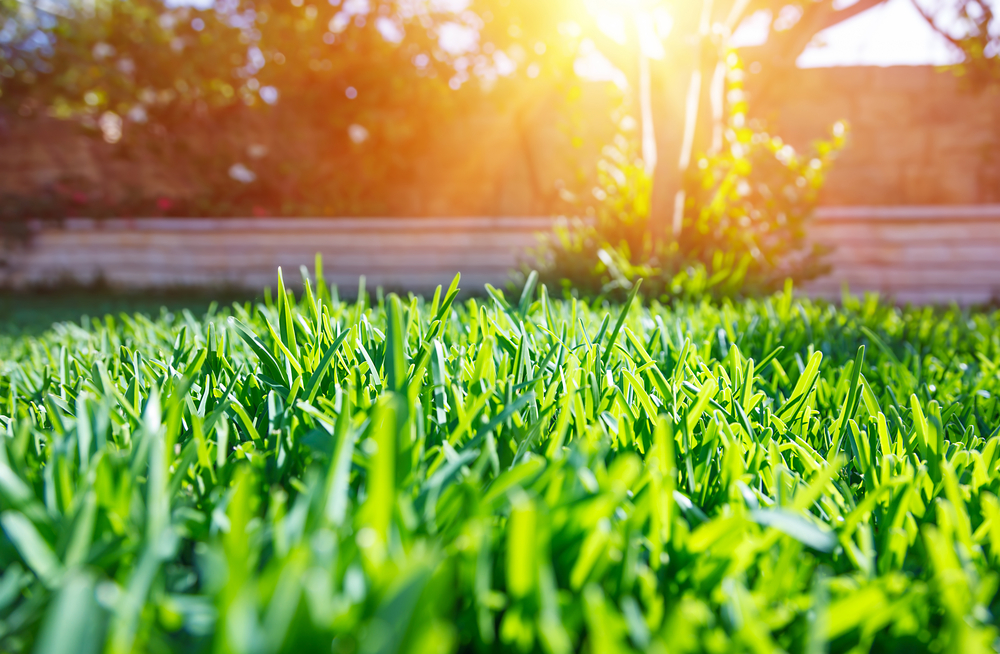 What to expect from our lawn care services